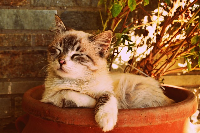 kotě spí v květináči