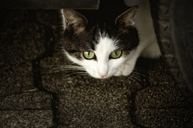 kočka pod dekou