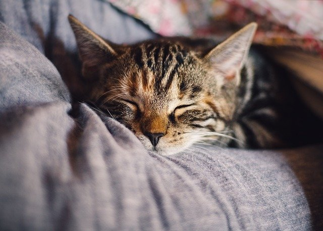 hlavička spící kočky