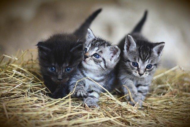 3 koťátka